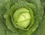 Лечение желудочных недугов овощами - полезные советы