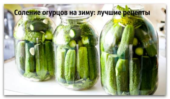 Малосольные огурцы - рецепты: Как быстро приготовить 77
