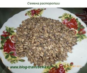 Растение для печени - расторопша. Лечебные свойства и противопоказания