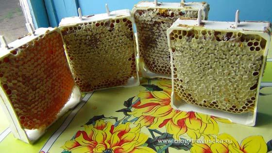 Как хранить соты с медом в домашних условиях