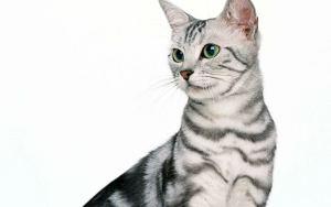 Почему кошка мало живет