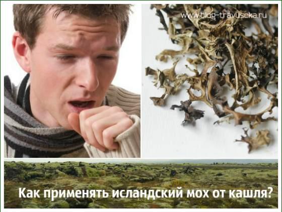 Исландский мох от кашля для детей