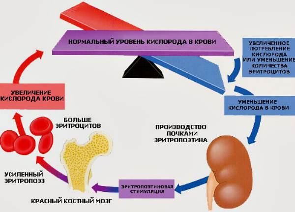 http://www.blog-travuscka.ru/
