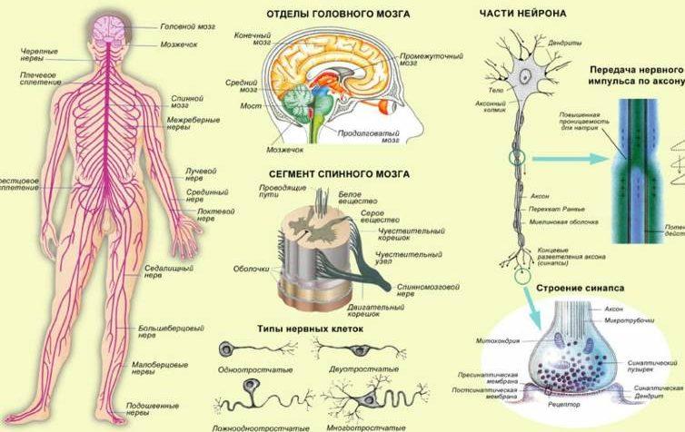 Как восстановить нервную систему в домашних условиях
