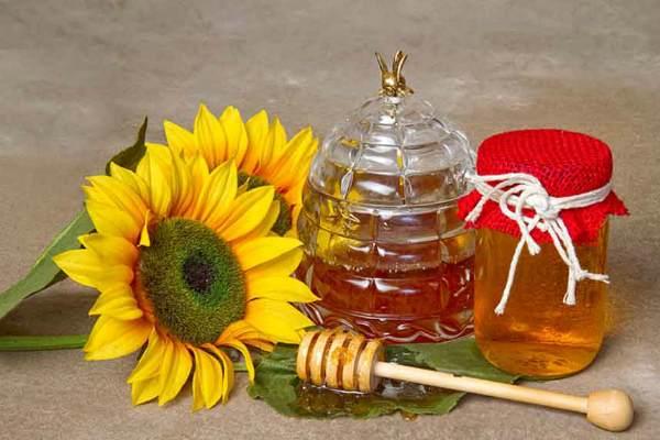 Полезные свойства подсолнечного меда
