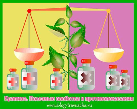 Крапива полезные свойства и противопоказания