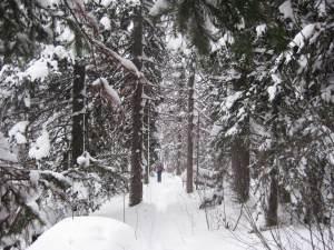 Лыжный поход по Тогуленку
