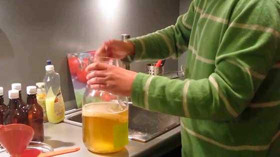 Как ухаживать за чайный грибом