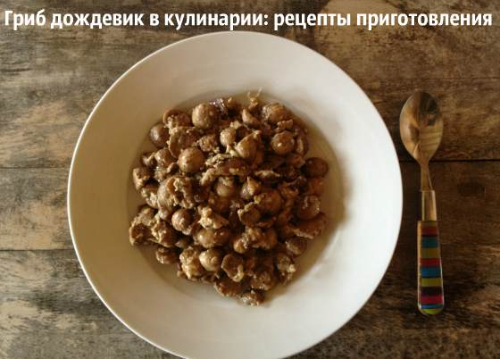 Гриб дождевик: рецепты приготовления